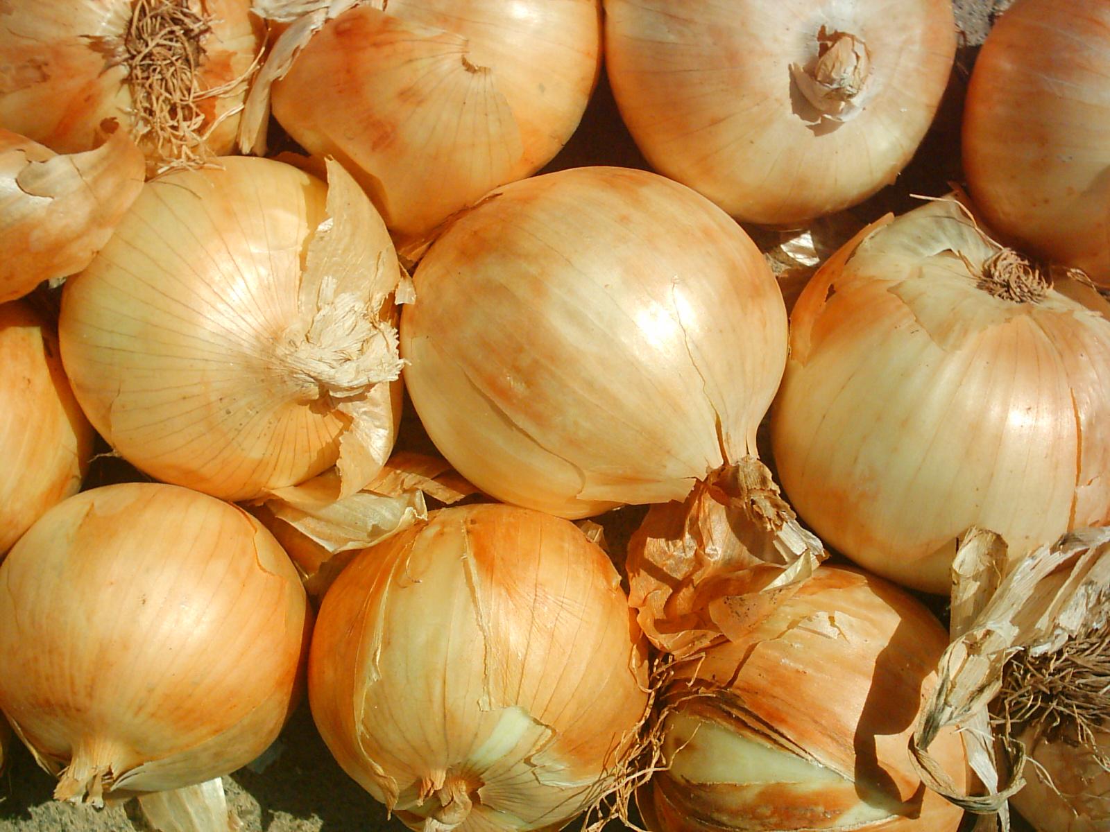 Cebolla procedente de Holanda acapara los mercados nacionales.